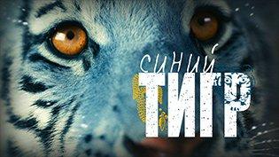 Фильм Синий тигр смотреть онлайн