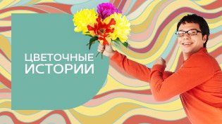 Программа Цветочные истории смотреть онлайн