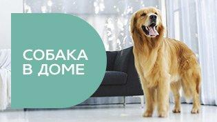 Программа Собака в доме смотреть онлайн