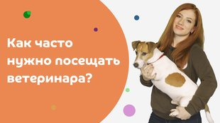 Как часто нужно посещать ветеринара?  смотреть онлайн